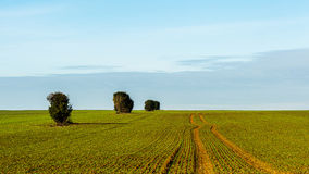 Geometry on agricultural land Royalty Free Stock Photography