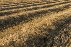 Lines of Straw Royalty Free Stock Image