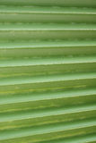 Lines and texture of green palm leaf Royalty Free Stock Photo