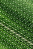 Lines and textures of green leaves Royalty Free Stock Images