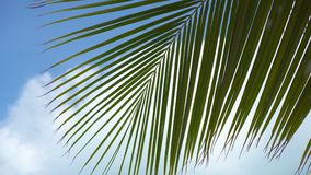 Lines and textures of green palm leaves. At exoric island stock footage