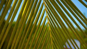 Lines and textures of green palm leaves at exoric island. Lines and textures of green palm leaves stock video footage