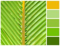 Lines and textures of green palm leaves with palette color swatc Royalty Free Stock Photo