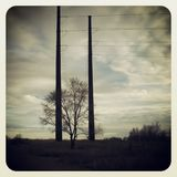 Between the lines. A tree between two power poles Stock Photo