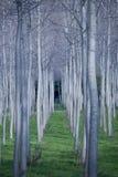 lines trees Royaltyfri Foto