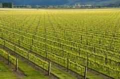 lines vines Arkivfoton