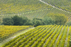 Lines of vineyard fields in Tuscany. In Italy royalty free stock image