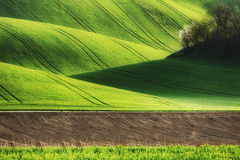 Lines and waves fields Stock Images