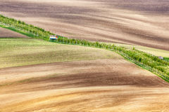 Lines and waves with grass border Royalty Free Stock Image