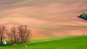Lines and waves with trees and chapel in the spring, South Moravia, Czech Republic. Lines and waves with trees and chapel in the spring in area known as Moravian stock video