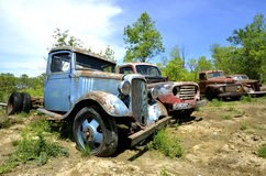 Lineup of old junked pickups. A row of old rusty non-functional pickups from the 40's and 50's Royalty Free Stock Photo
