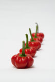 Lineup of red peppers Royalty Free Stock Photos