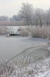 Lingüetas e grama congeladas Imagem de Stock