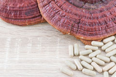 Ling zhi mushroom or Ganoderma lucidum capsule Royalty Free Stock Photography