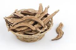 Ling Zhi Mushroom, Lingzhi (Ganoderma lucidum (Fr.) Karst) Royalty Free Stock Images