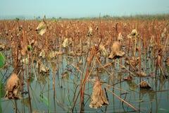 Lingbao wetland stock photo