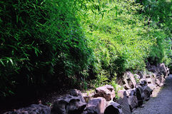 Lingering Garden Bamboo forest. In suzhou Stock Images