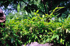 Lingering Garden Bamboo. Forest in suzhou Stock Photo