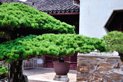 Lingering Garden bonsai Stock Photos