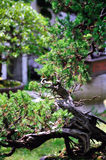 Lingering Garden bonsai Stock Photography
