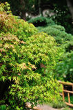 Lingering Garden bonsai Stock Photo