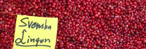 Lingonberries για τις πωλήσεις Στοκ Εικόνα