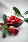 Lingonberries Royalty Free Stock Images