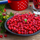 Lingonberries Immagini Stock