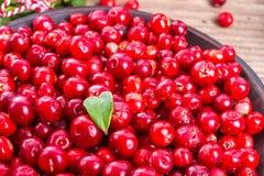 Lingonberries Imagens de Stock Royalty Free