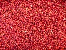 Lingonberries - achtergrond Stock Foto