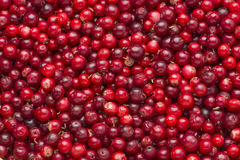 Lingonberries as background Royalty Free Stock Images