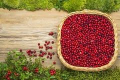Lingonberries auf altem Brett als Hintergrund Lizenzfreie Stockfotografie