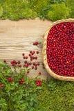 Lingonberries auf altem Brett und böser Korb und Moos Lizenzfreies Stockfoto