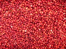 Lingonberries - background Stock Photo