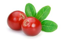 Lingonberries cowberries, foxberries isolated on the white bac Stock Photos