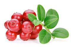 Lingonberries cowberries, foxberries isolated on the white bac Stock Images