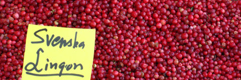 Lingonberries dla sprzedaży Obraz Stock