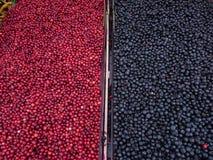 Lingonberries en Bosbessen Stock Foto