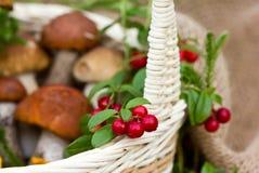 Lingonberries en paddestoelen in de mand Een mooie samenstelling van bosbessen en paddestoelen Stock Fotografie