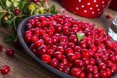 Lingonberries Stock Photos