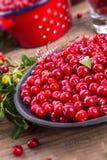 Lingonberries Royalty Free Stock Photo