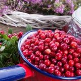 Lingonberries Royalty Free Stock Image