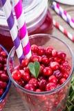 Lingonberries Royalty Free Stock Photos