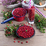 Lingonberries Stock Images