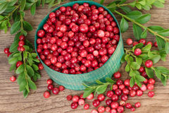 Lingonberries in green basket over wood Royalty Free Stock Photo