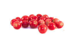 Lingonberries isolated Royalty Free Stock Photography
