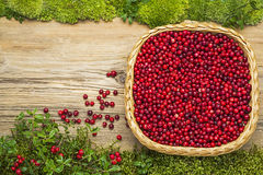 Lingonberries  on old board as background Royalty Free Stock Photography