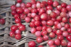 Lingonberries in a wicker basket Stock Photo