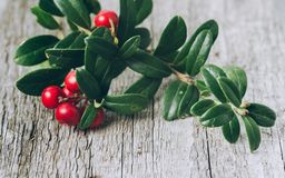 Lingonberries z liśćmi na drewnianym tle obrazy royalty free