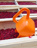 Lingonberry Stock Photography